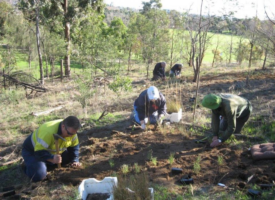 Royal Park – planting Sat 30 may 2015 011 (2)